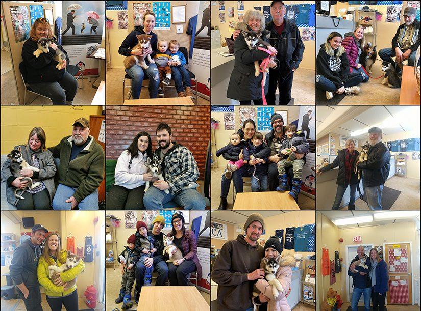 Husky puppy adoption collage