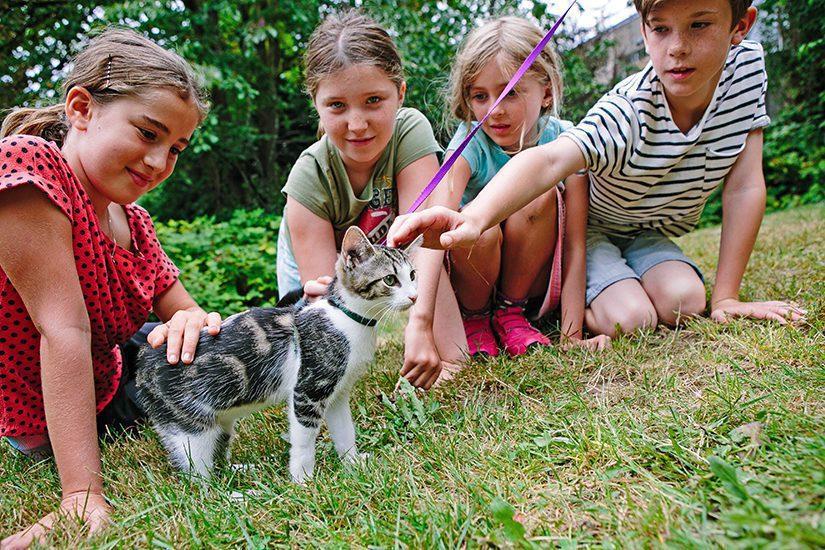 kids meeting a kitten on a leash