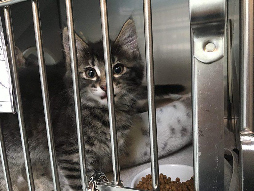 kitten in shelter