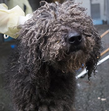The Business Of Cruelty Puppy Mills Bc Spca