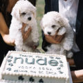 Nude Vodka puppies and cake