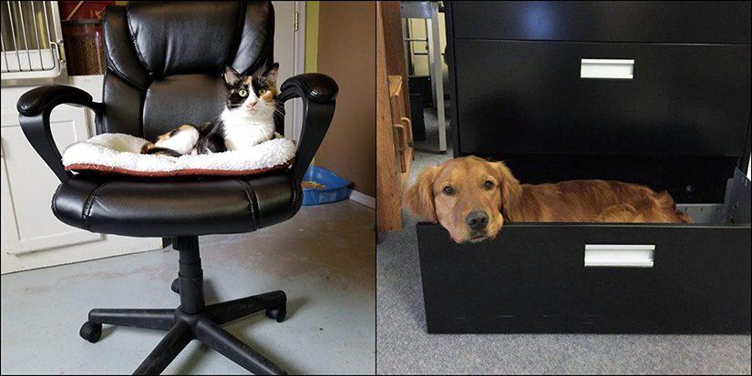 office pets