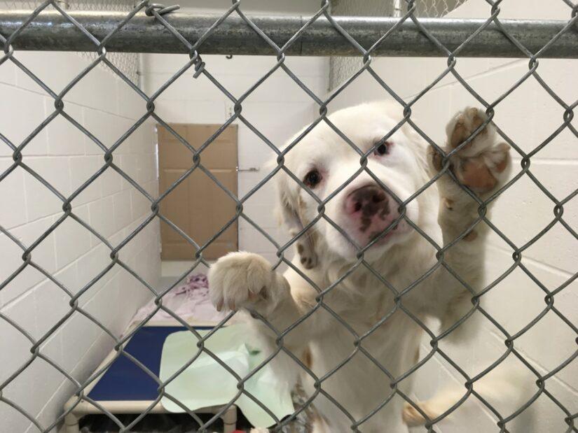 princeton puppy cage