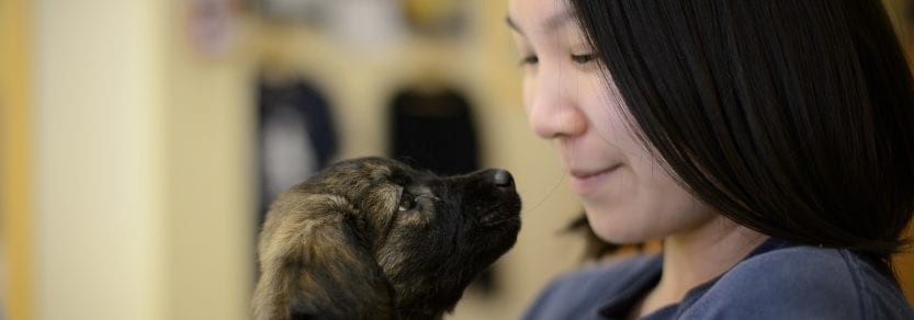 Laws and enforcement in your community help topics | BC SPCA