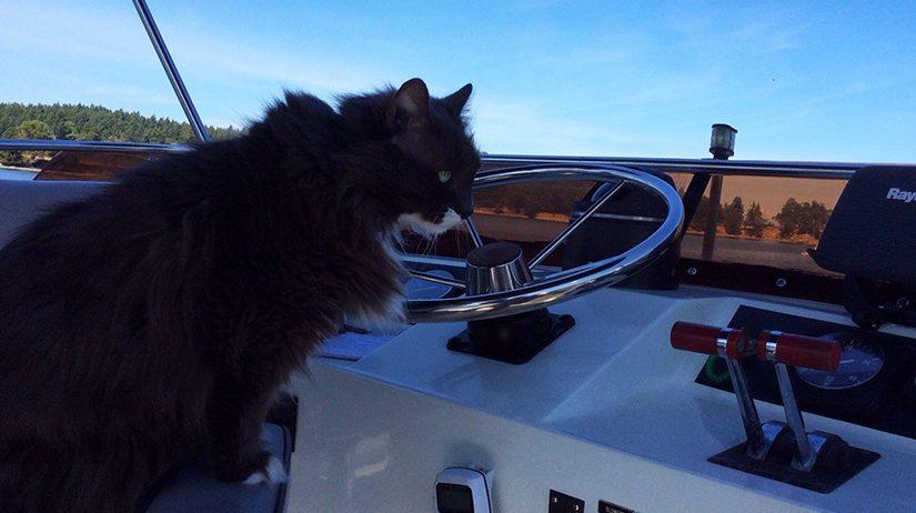 Captain Smokey the cat