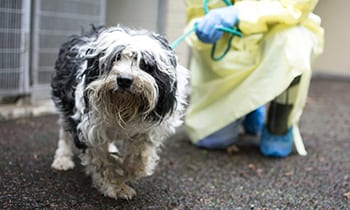 BC SPCA seizes 29 dogs and puppies from Squamish breeder