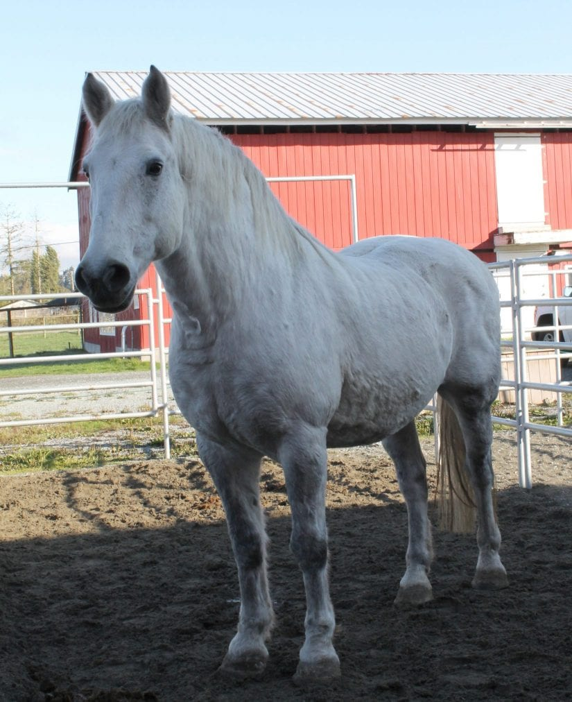 Horse rescued from wildfires hunting for new home