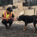 dog approaching rescuer BC SPCA