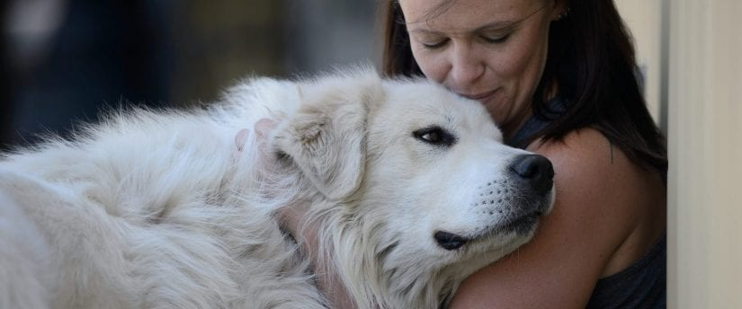 Resultado de imagen de Great Pyrenees and owner cuddling""