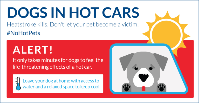 #nohotpets infrographic preview