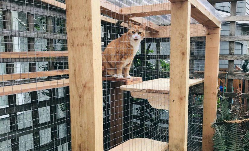 orange cat in catio