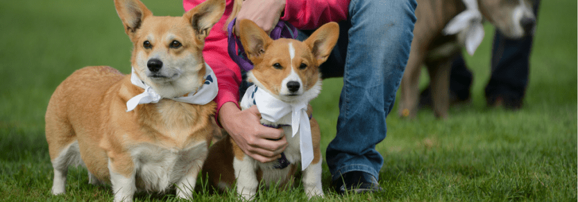 Join the walk to fight animal cruelty