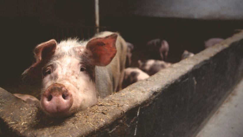 BC SPCA building a better future for Canada's farms