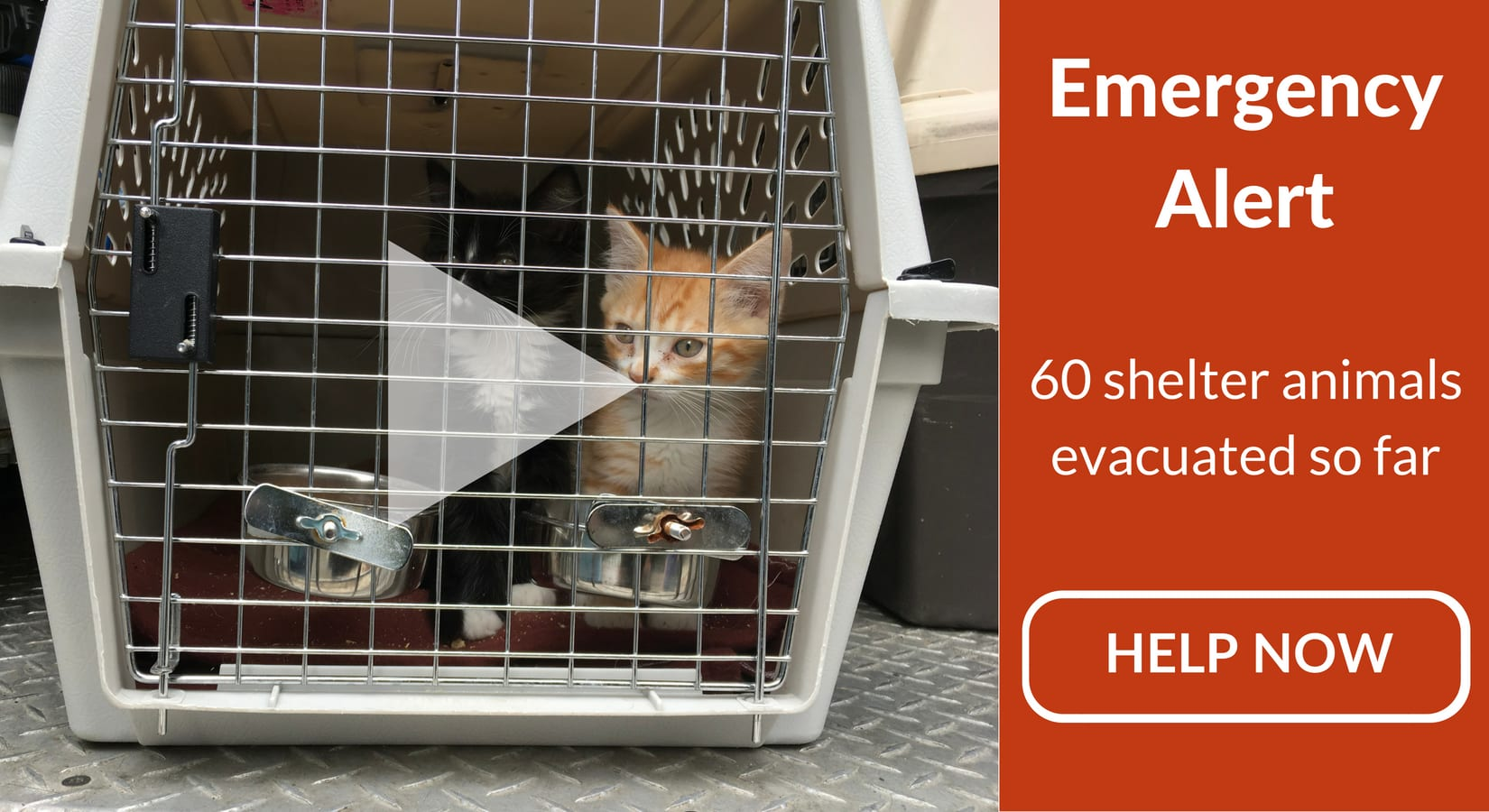 rescued kittens in carrier