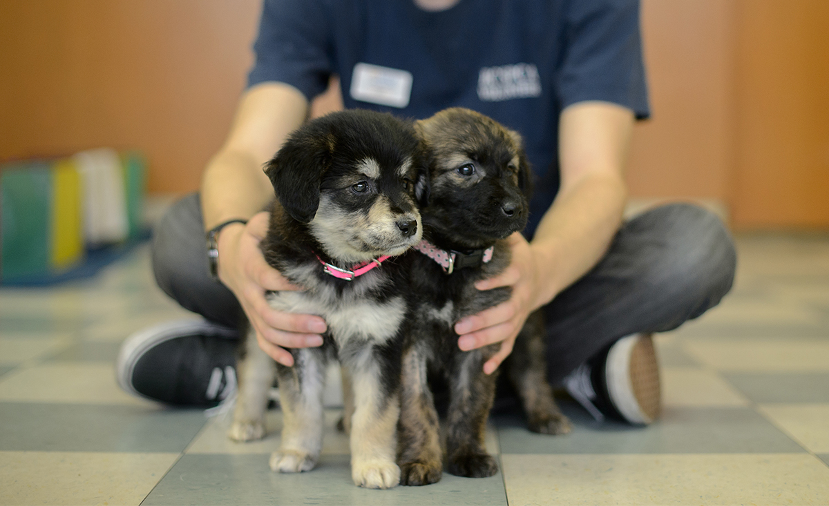 BC SPCA vaccinate to protect your dog from parvo