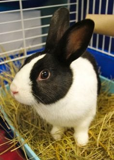 rabbit in litter box