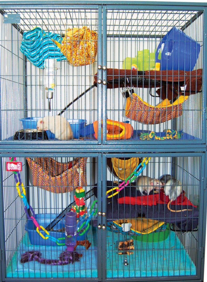 rat habitat