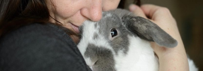 Grey and white rabbit being cuddled by woman