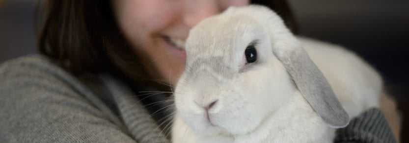 White rabbit being cuddled by girl