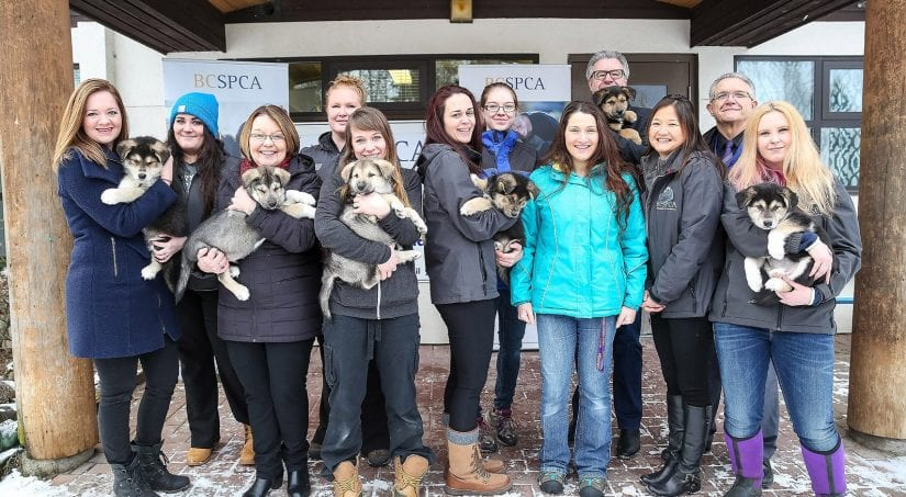 BC SPCA staff outdoors with puppies