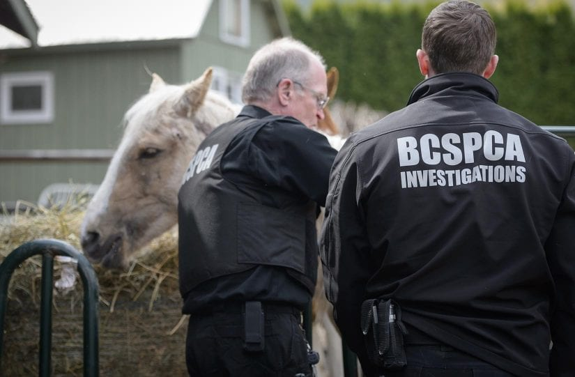 How to report animal cruelty to the BC SPCA