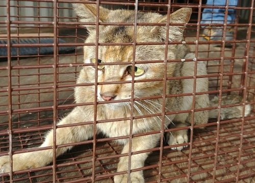 stowaway kitty in cage, found in shipping container from China