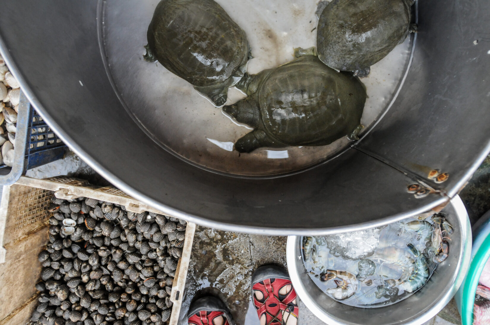 Turtles and shrimp in metal buckets