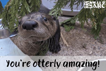 Otterly amazing ecard