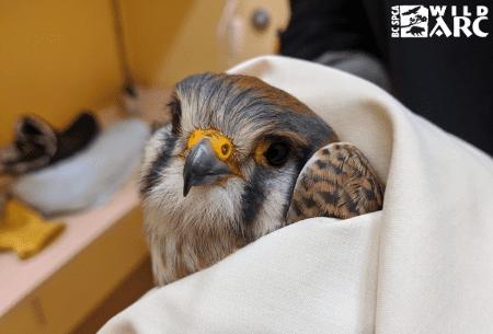 Hawk in care ecard