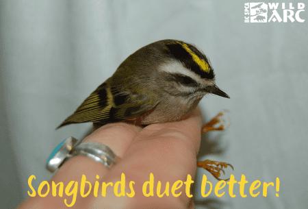 Songbirds duet better ecard