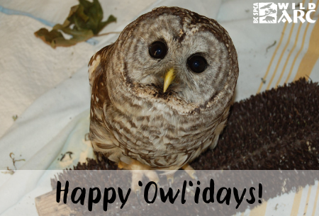Happy Owlidays ecard