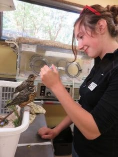 Wild ARC Volunteer Animal Care Position