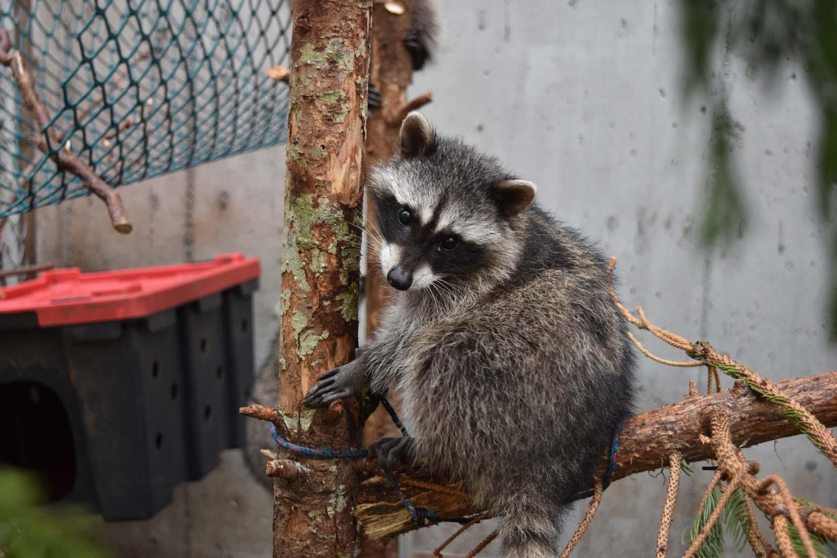 BC SPCA Wild ARC CritterCam - Watch wildlife in care live
